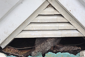 Gable vent damage from squirrel
