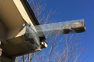 Squirrel in trap at soffit