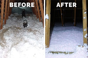 soiled attic insulation cleanup